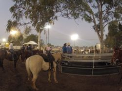 116 Australie. Rodeo Night