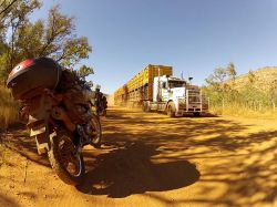 63 Road-train transportant du bétail sur une piste du Kimberley en Australie